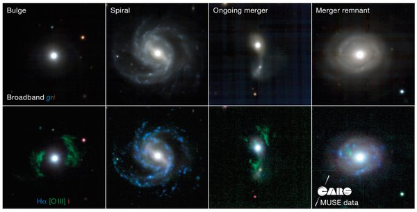 Galaxies in CARS observed with MUSE